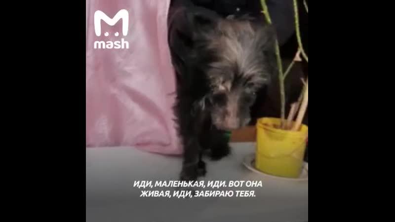 Волонтёры спасли собаку которая неделю провела в запертой квартире без воды и еды