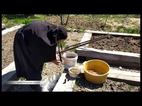 Записки онлайн принимают сёстры монастыря в ЕАО. РИА Биробиджан