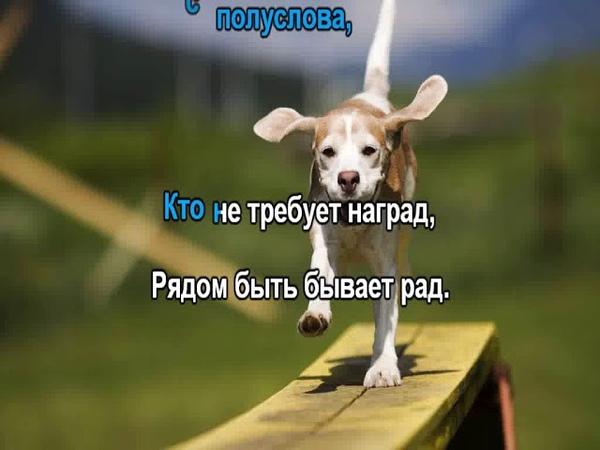 Преданней собаки нету существа КАРАОКЕ