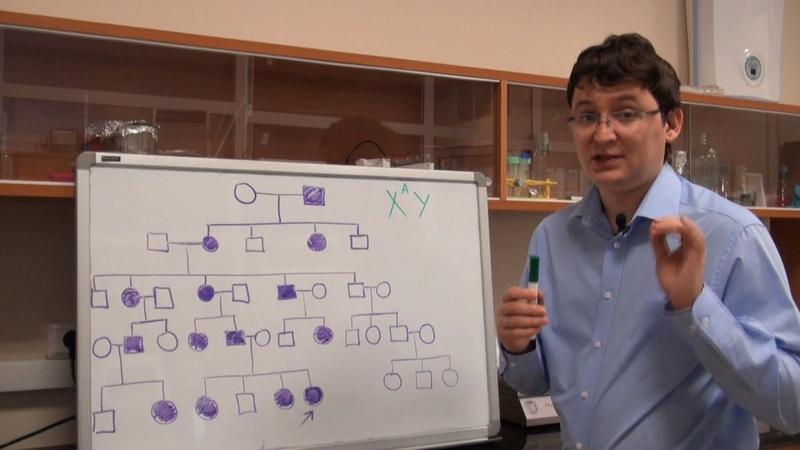 Анализ родословных Урок 6 Задача 7 4 быстрый разбор в конце
