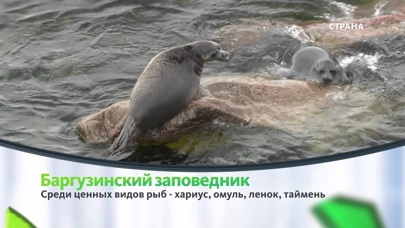 Баргузинский заповедник Природа Телеканал Страна