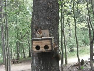 """Белки в парке """"Лесной ключ""""  г."""