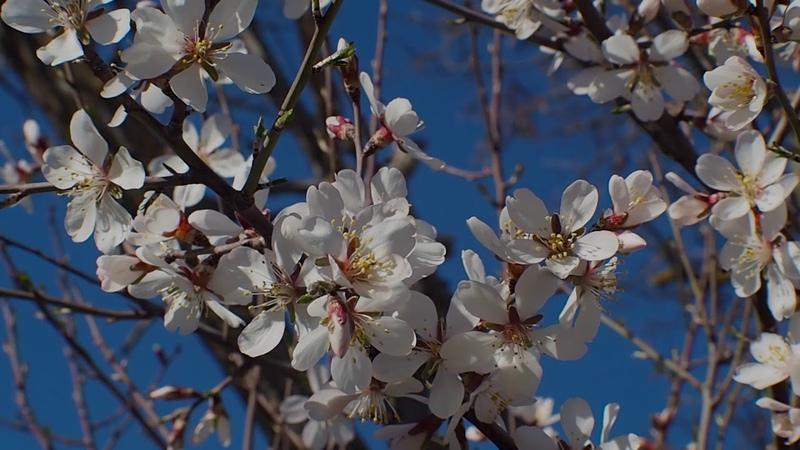 Цветы Черноморского