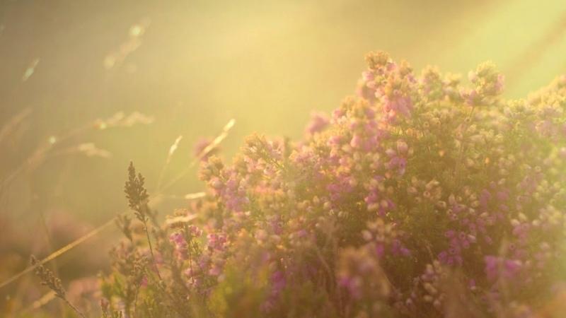 Дарует МОЩНОЕ Омоложение И Безсмертие МАГИЧЕСКАЯ МУЗЫКА БОГИНЬ Вересковое Счастье ЭНЕРГИЯ ЛАЙФ