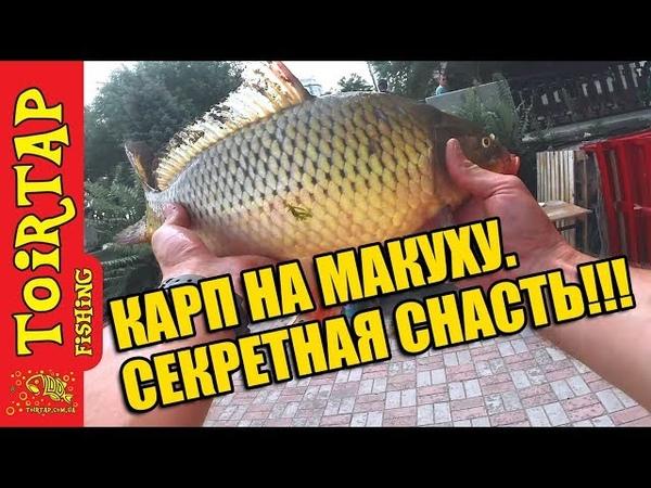МАКУШАТНИК ЛОВЛЯ КАРПА Советы начинающим рыбакам