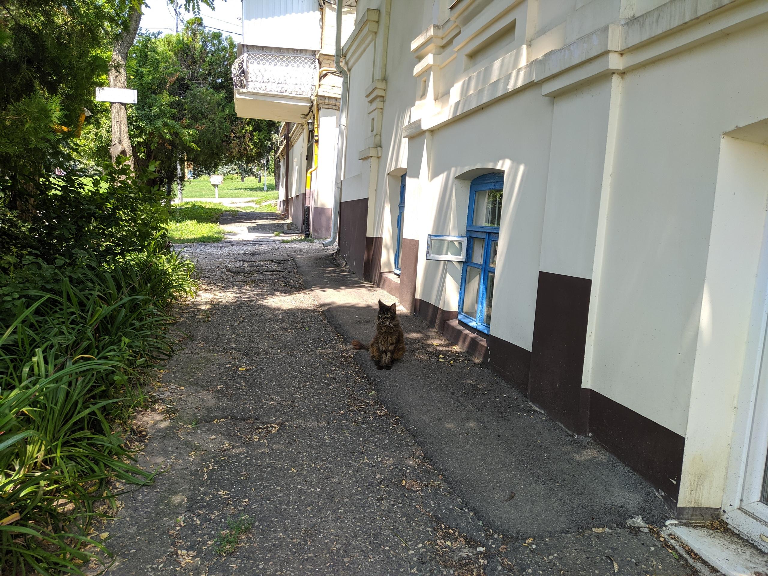 Суровый котик из Пятигорска #котикиебеней - Фото