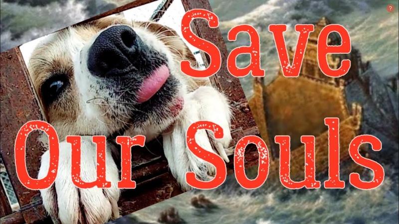 SOS! Всемирный потоп...Животным в приюте нужна помощь/Global flood ... shelter and animals need help