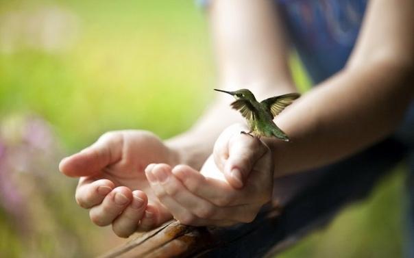 Птица счастья вовсе не против поклевать зерна с вашей руки