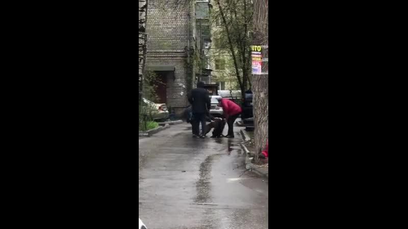 Бойцовская собака на самовыгуле и без намордника на протяжении 5 минут драла шею дворняжки Седой мужик хозяин пита