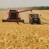 Ставка на урожайность себя оправдывает. С полей региона убрано более 1,8 миллиона тонн зерна и зернобобовых