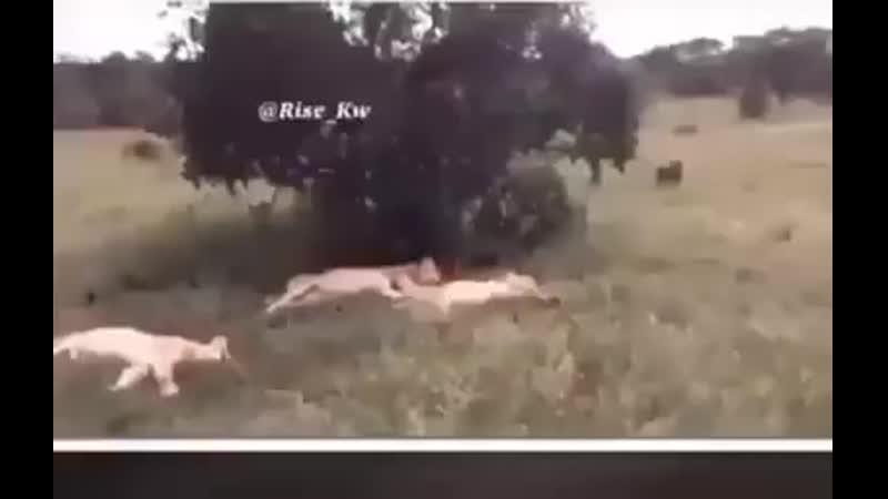 В мире животных дикий мир природы on Facebook