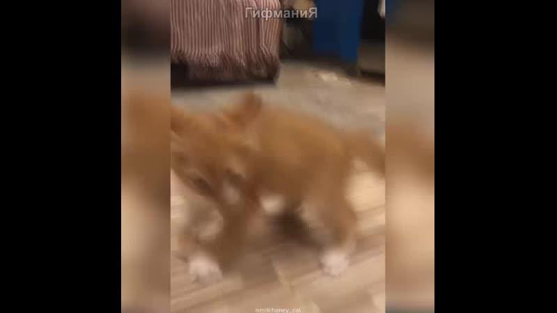 Рыжая букашка атакует