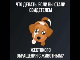 Что делать если столкнулись с жестоким обращением с животными