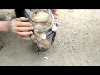 Кот в амортизаторе проехал 70 км