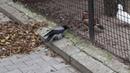 Ворона троллит утку в Калининградском зоопарке
