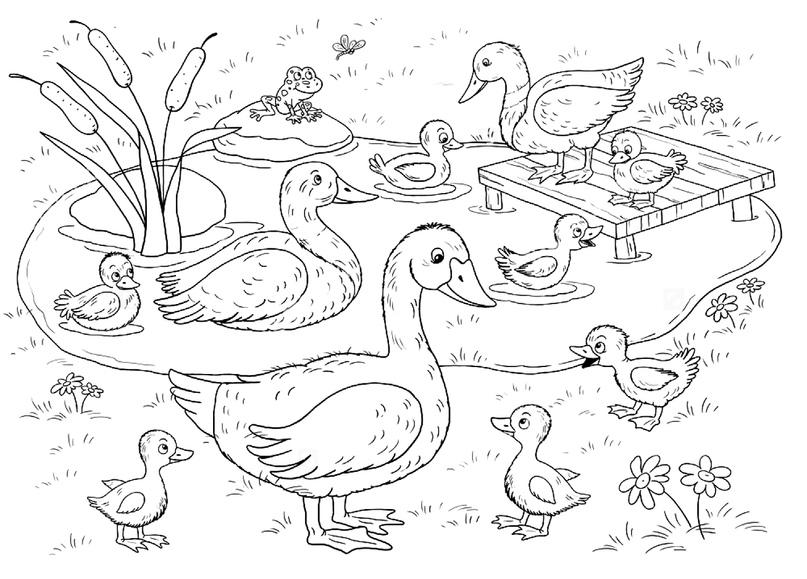 стиль птичий двор раскраска для малышей уже повзрослела