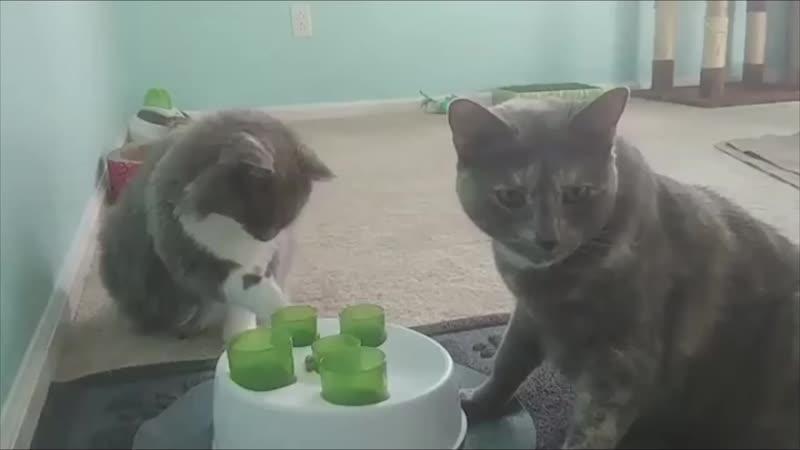 «Одна из моих кошек явно умнее»
