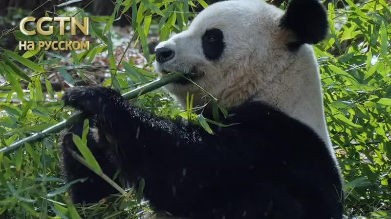 Удивительный Китай: Урок лазания по деревьям