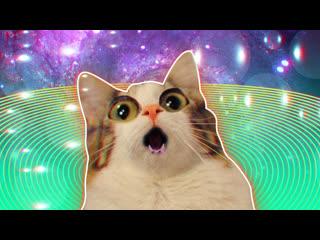 Смешные коты | Подборка за неделю #1 | Котопятница 13-ое
