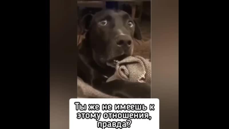 Видео Собака бабака