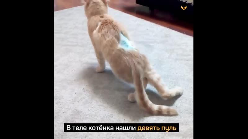 Парень спас кота, которого расстреляли из пневматики