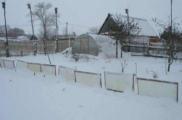 6 проверенных временем способов удержать снег на участке/ Снег это естественное укрытие для растений от зимних морозов. При бесснежной зиме некоторые растения рискуют погибнуть, поэтому садоводы