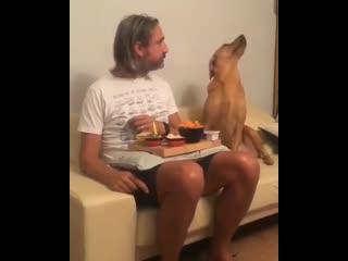 Когда делаешь вид что не голоден ))