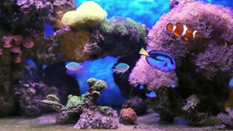 Спокойная музыка маримбы и звуки воды в аквариуме