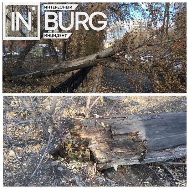 На улице Белинского, 157 упало дерево...