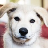 Собака - Друг человека   Собаки