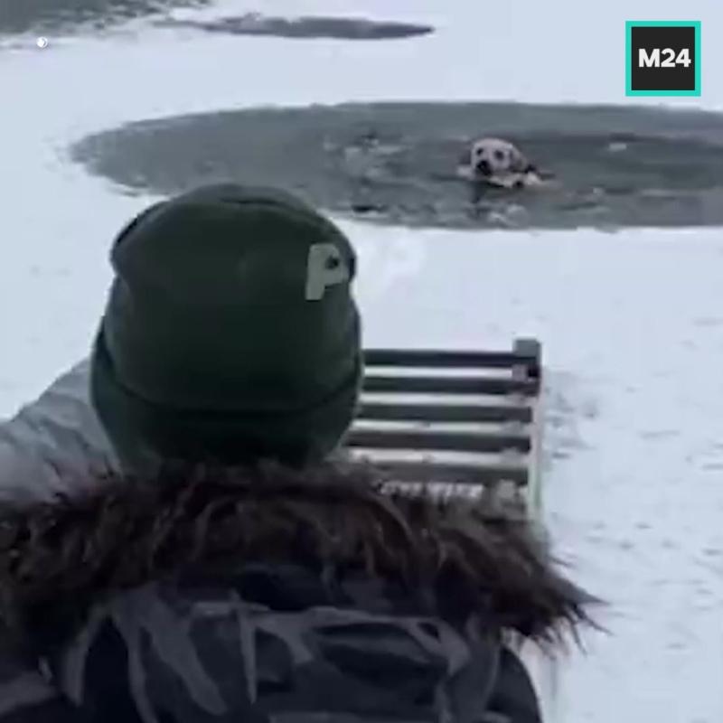 Залезли в ледяную воду, чтобы спасти собаку — Москва 24