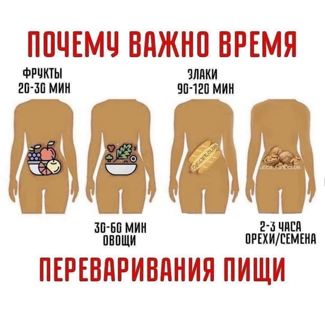 Зная время, легко составить для себя идеальное меню питания!