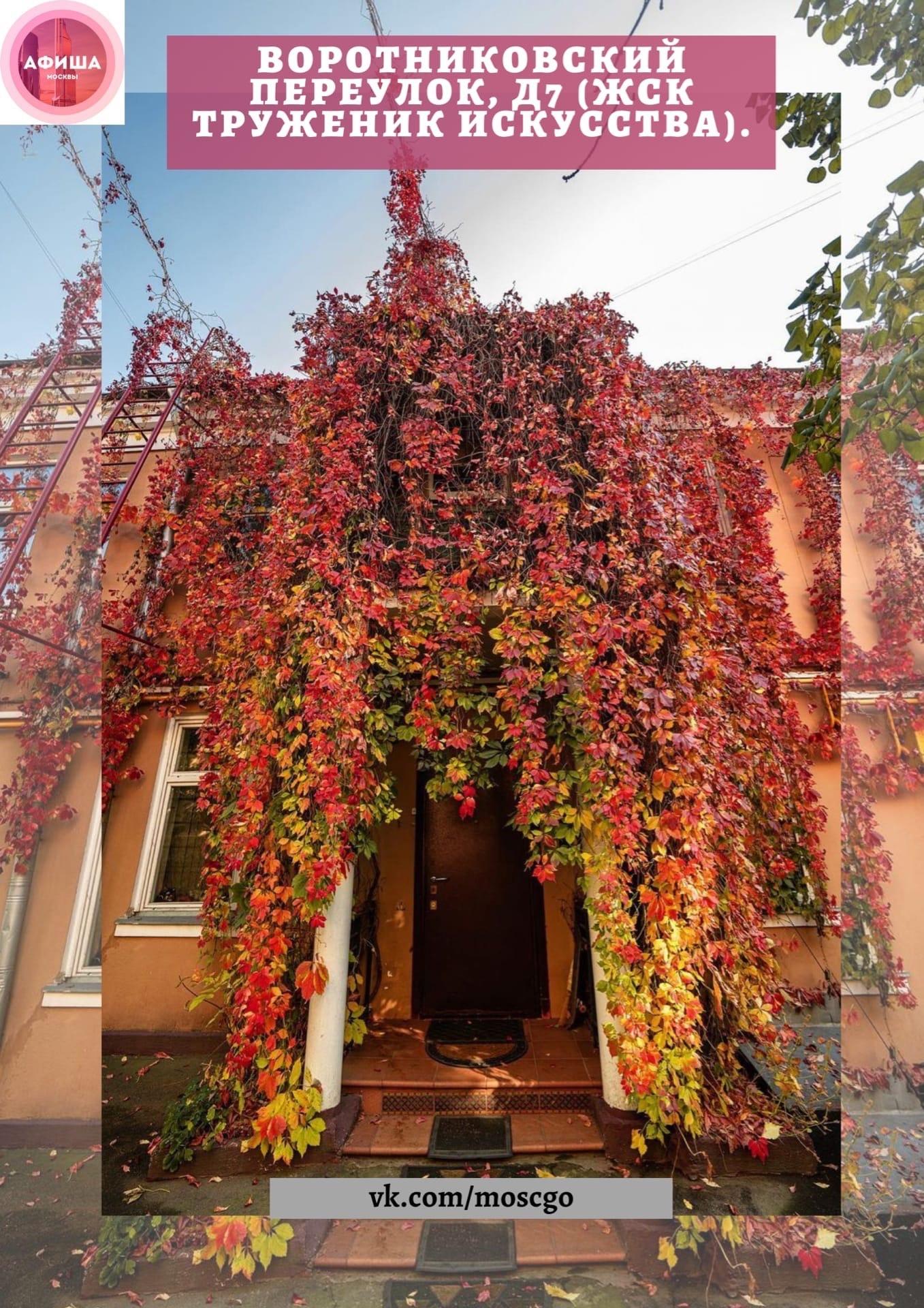 ТОП-10 «виноградных» мест Москвы