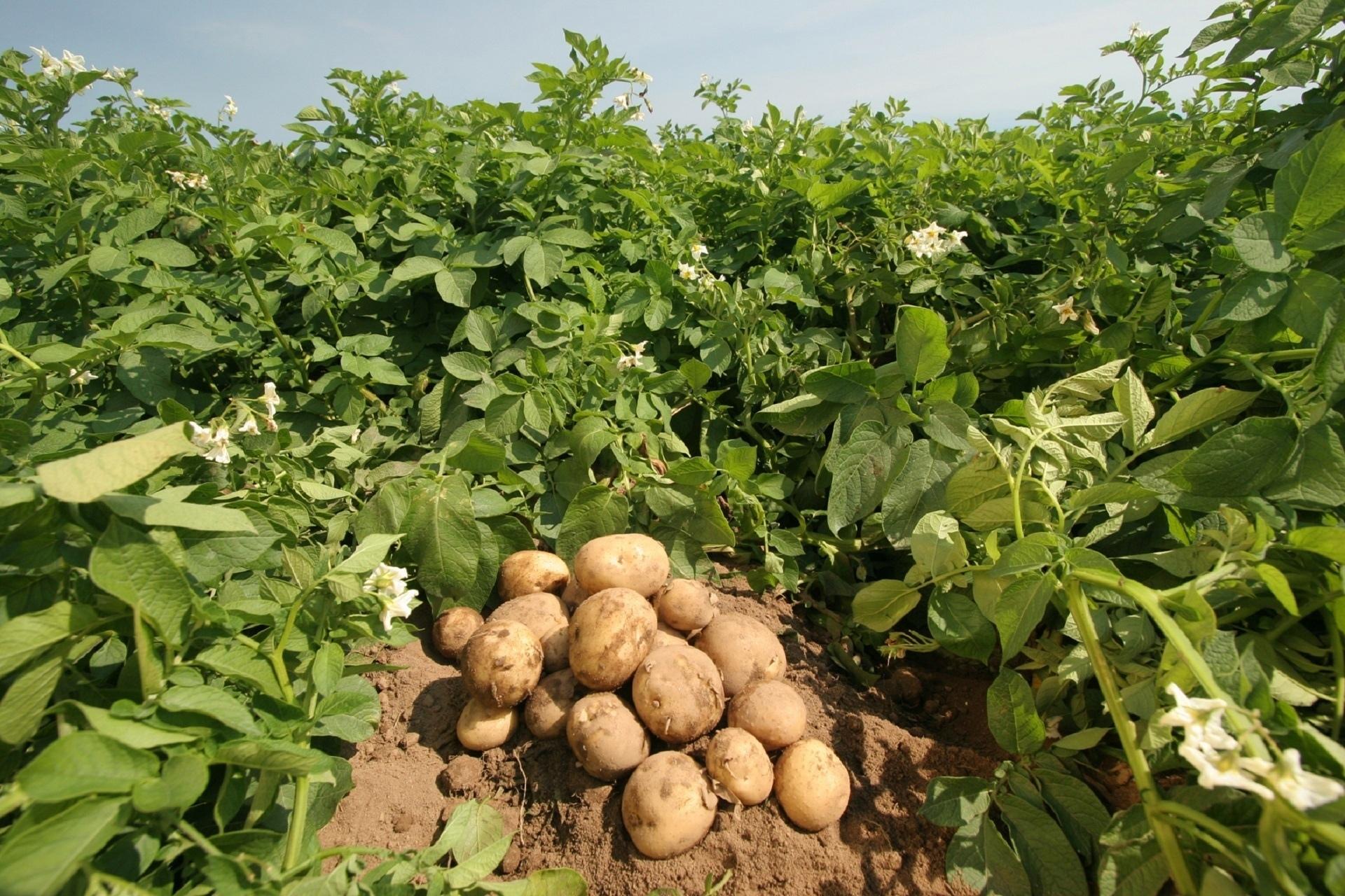 Выращивание овощей на полях Интервью с владельцем