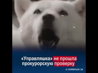В Ноябрьске управляющая компания не прошла прокурорскую проверку из-за нечищеных крыш