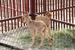 Липчан просят помочь зоопарку
