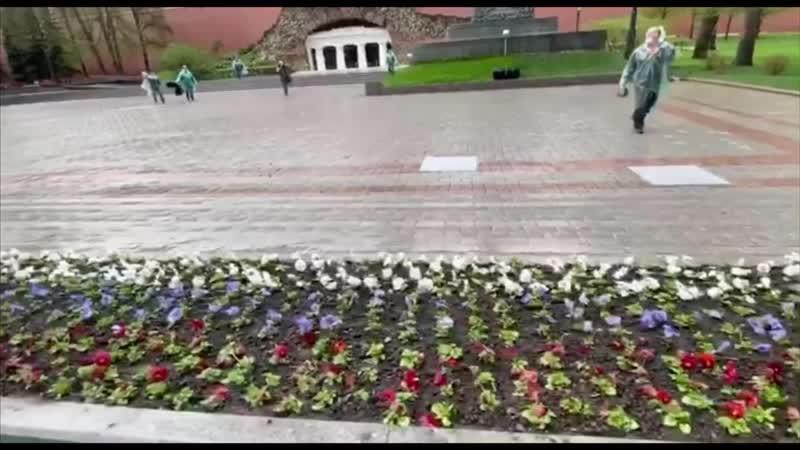 Посадка виолы в Александровском саду май 2020