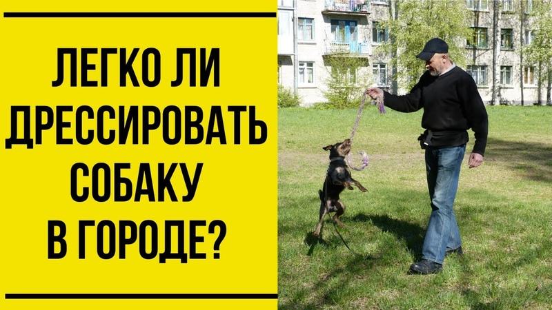 Легко ли дрессировать собаку в городе