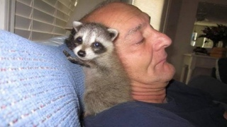 Man saved baby raccoon, nursed him back to health and let him go. But something went wrong!