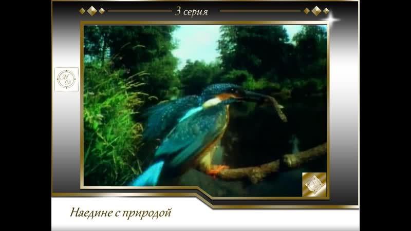 Наедине с природой 3 серия Сафари XXI века Wildlife on one 01x03 21st Century Safari