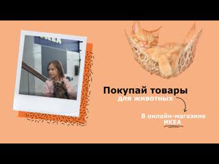 Покупай товары для животных  в онлайн-магазине ИКЕА