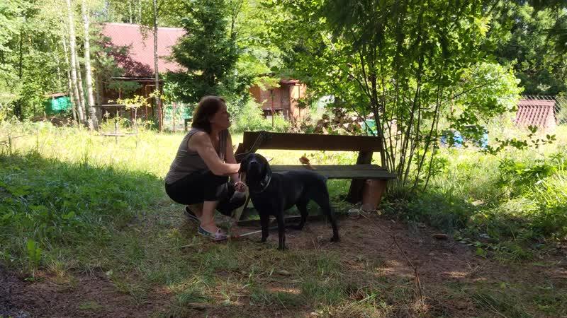 3 7 Татьяна Гысева УПП 5 Мы в ответе за тех кого приручили Мы с собакой хоть куда без барьерная среда