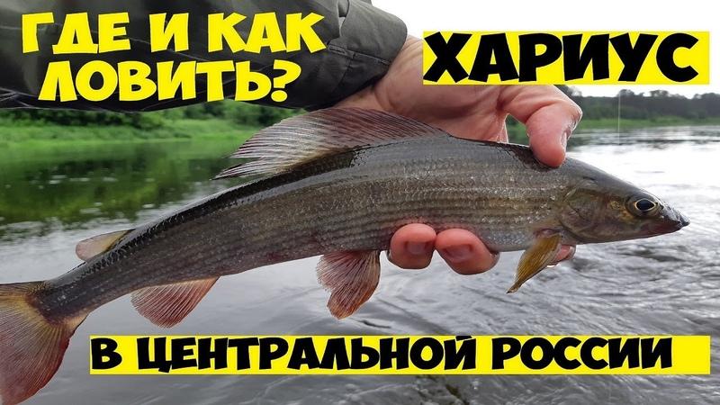 Ловля ХАРИУСА и окуня на спиннинг Бешеный клев окуня Удачная рыбалка летом на вертушки