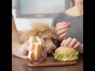 Почему нельзя кормить собаку человеческой пищей
