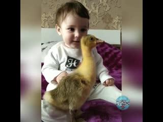 Очень хорошо,когда с детства прививают любовь к животным