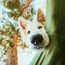 Личный фотоальбом Алексея Шевченко