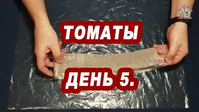 Домашнее проращивание семян томатов Дикая роза День 5 DIY DACHA Ep 74